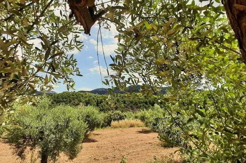 Marketing online per Turisme Rural