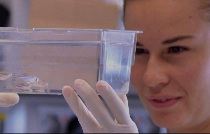 ZeClinics - Investigacion sobre nuevos medicamentos mediante peces cebra y metodología CRISPR/CAS9